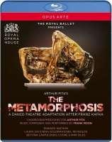 Pita: The Metamorphosis
